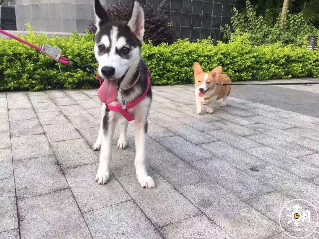 在广州,月薪5千,存款为0,却义无反顾地养了条狗!(图19)