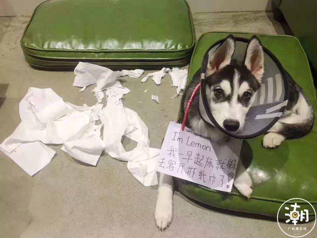 在广州,月薪5千,存款为0,却义无反顾地养了条狗!(图18)