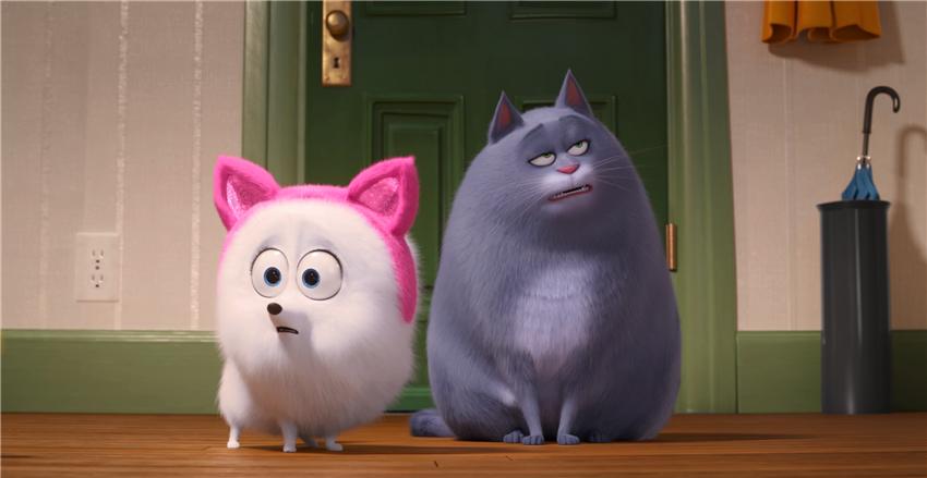 不要随意教一只狗做猫咪?爱猫人士能够斟酌养狗了