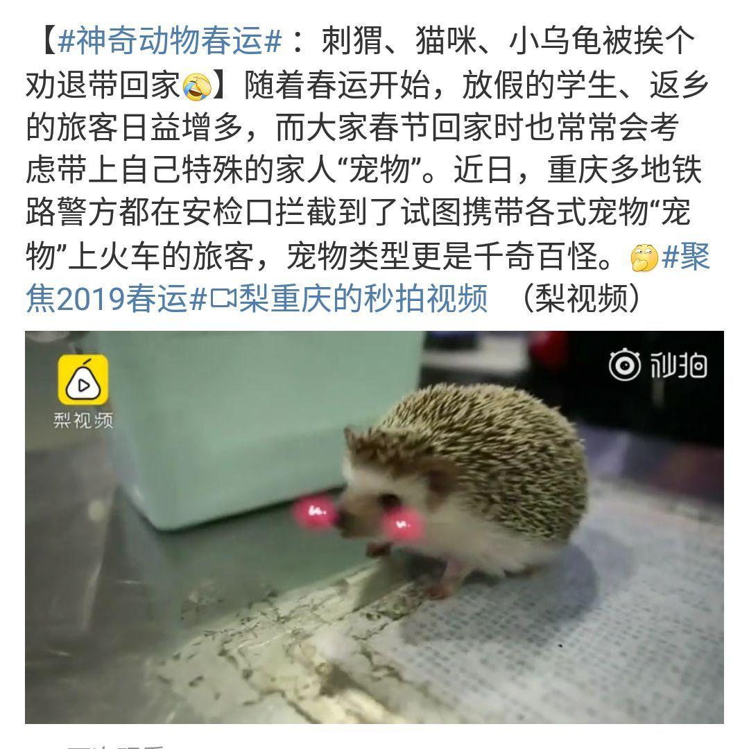 在广州,月薪5千,存款为0,却义无反顾地养了条狗!(图26)