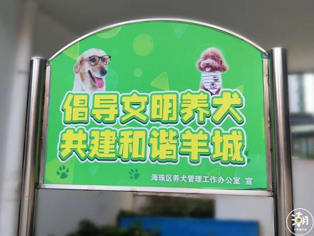 在广州,月薪5千,存款为0,却义无反顾地养了条狗!(图28)