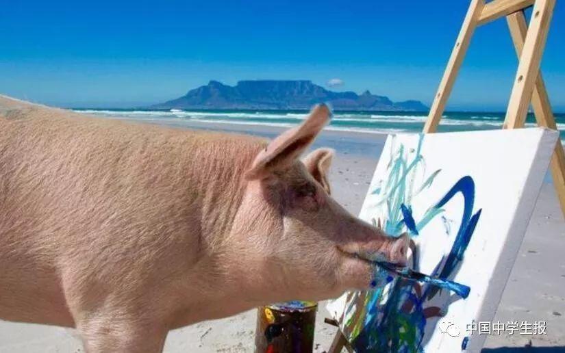 会画画的小猪