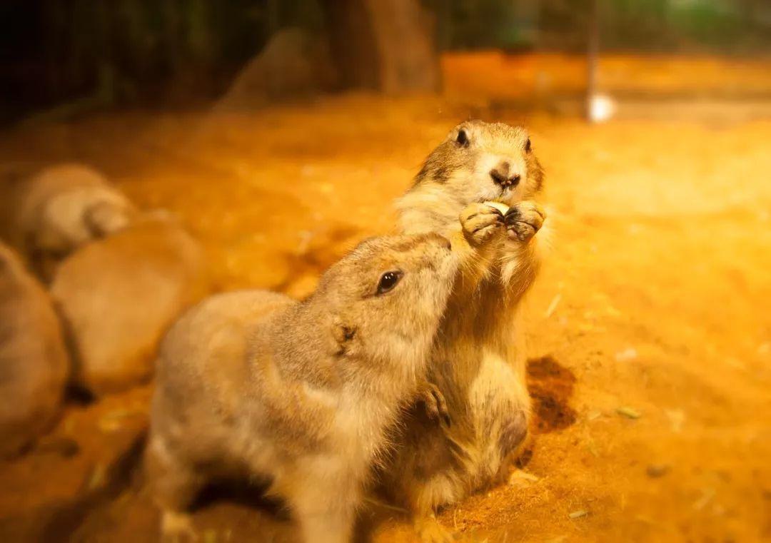 春节可用!188元抢长沙【兔小狐动物主题公园】1大1小亲子票!鸡飞蛋打兔子欢图片