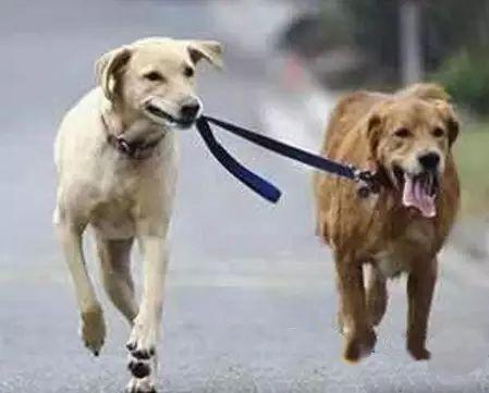 第一次养狗需要注意的地方!(图4)