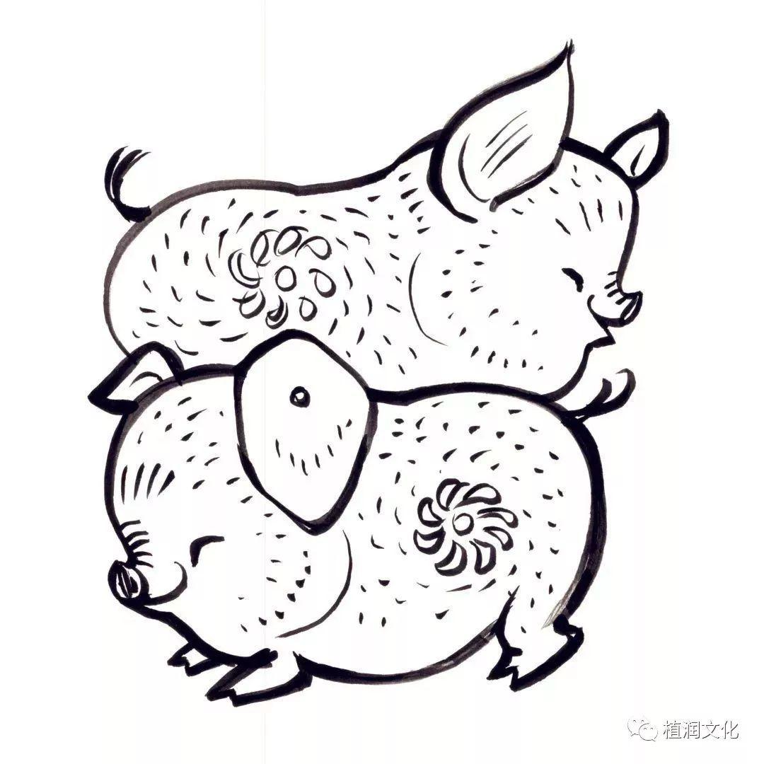猪年赏名家猪画