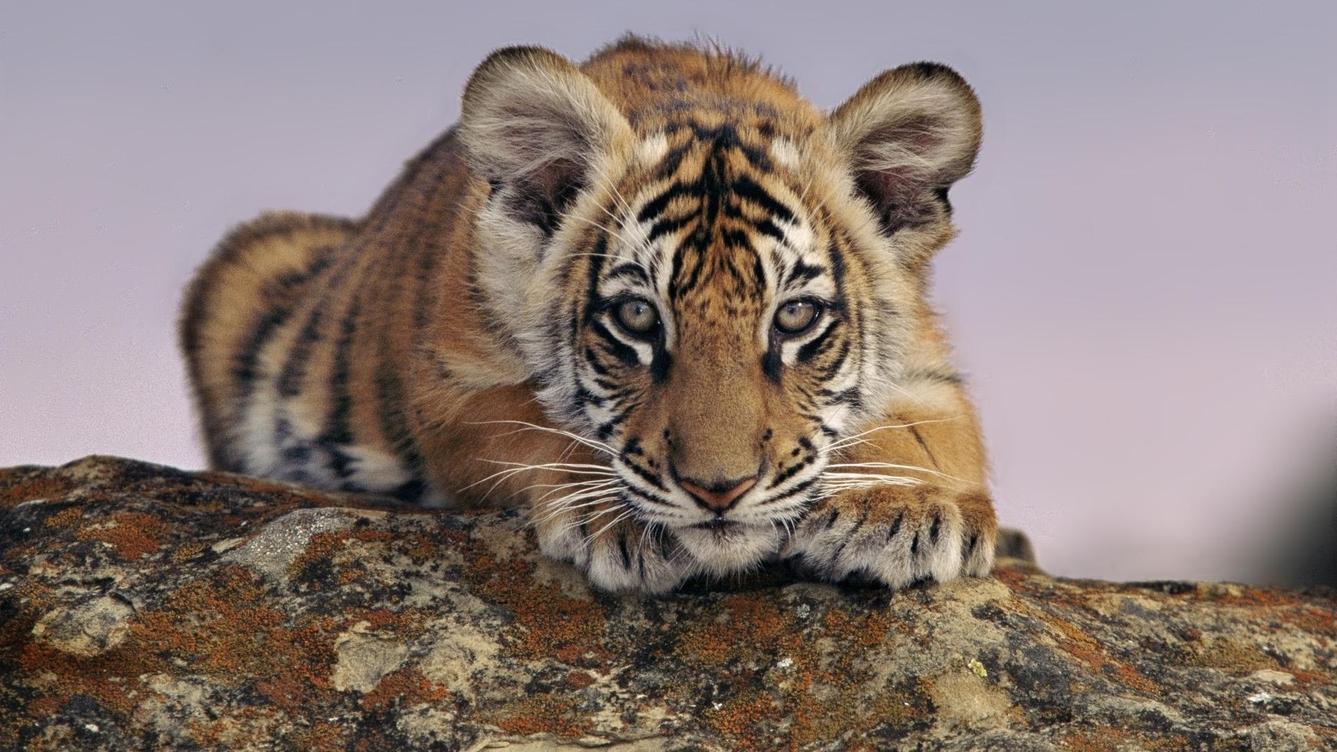属虎和什么属相最配 什么属相最配属虎的
