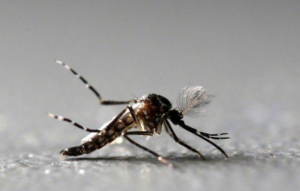 美国研究团队发现:喂蚊子减肥药,可让它失去吸食人血兴趣!