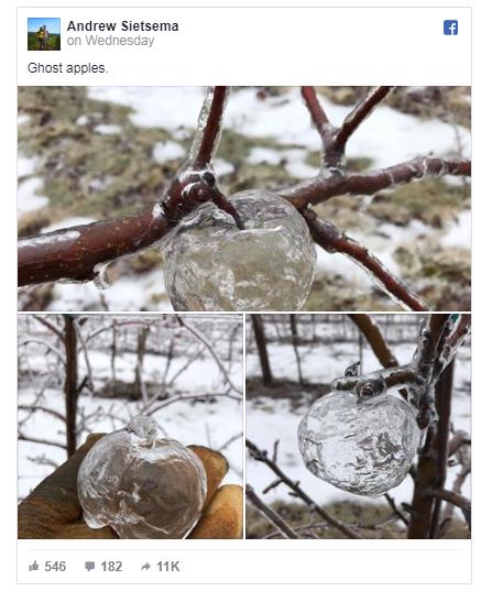 """看看极地漩涡造成的冰冻""""幽灵苹果"""""""