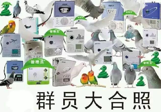 第1届本质柠檬争霸赛:复读机,人类精,冠军王,真香怪,蜗牛花落谁家?城堡鸽子在武汉哪里买图片
