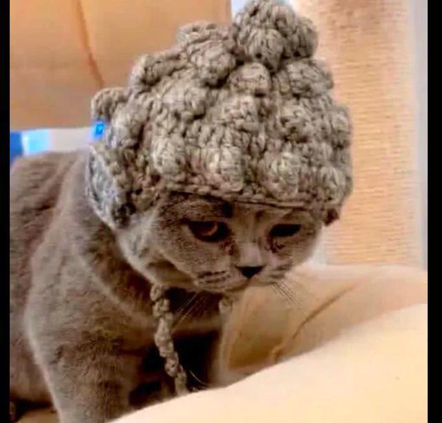 網友給貓織了特別造型的帽子,讓它看起來像佛祖!貓:我要用膳!_貓咪