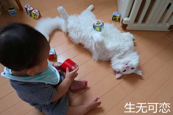 貓咪陪寶寶玩耍,玩了會癱倒在地,3年后有你后悔的_寵物