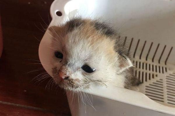 男子好心救了一只小奶貓,結果無知之舉害死貓,網友:貓咪終結者_小貓