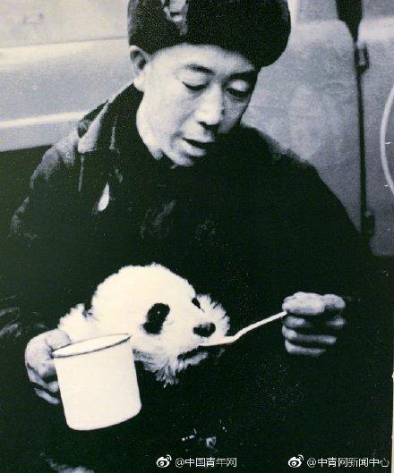 """大熊貓發現150周年,今夕熊貓""""奶爸""""照片對比,走進令人羨慕的熊貓飼養員_工作"""