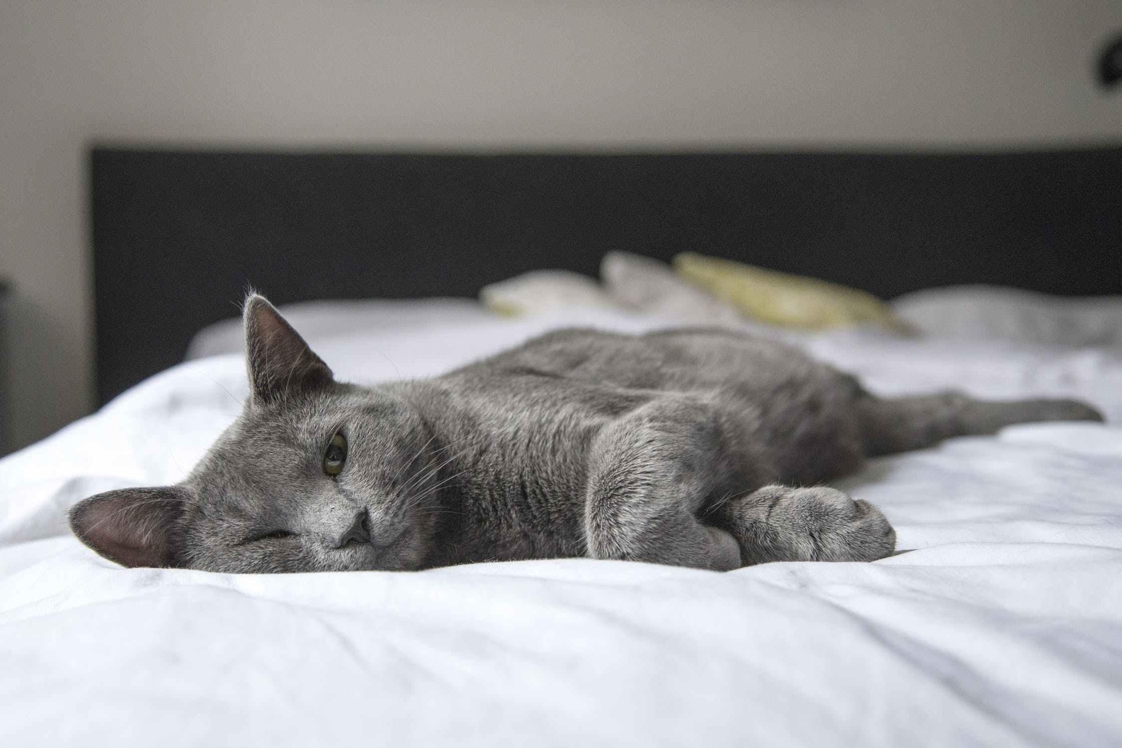 猫得尿毒症可以治愈吗图片