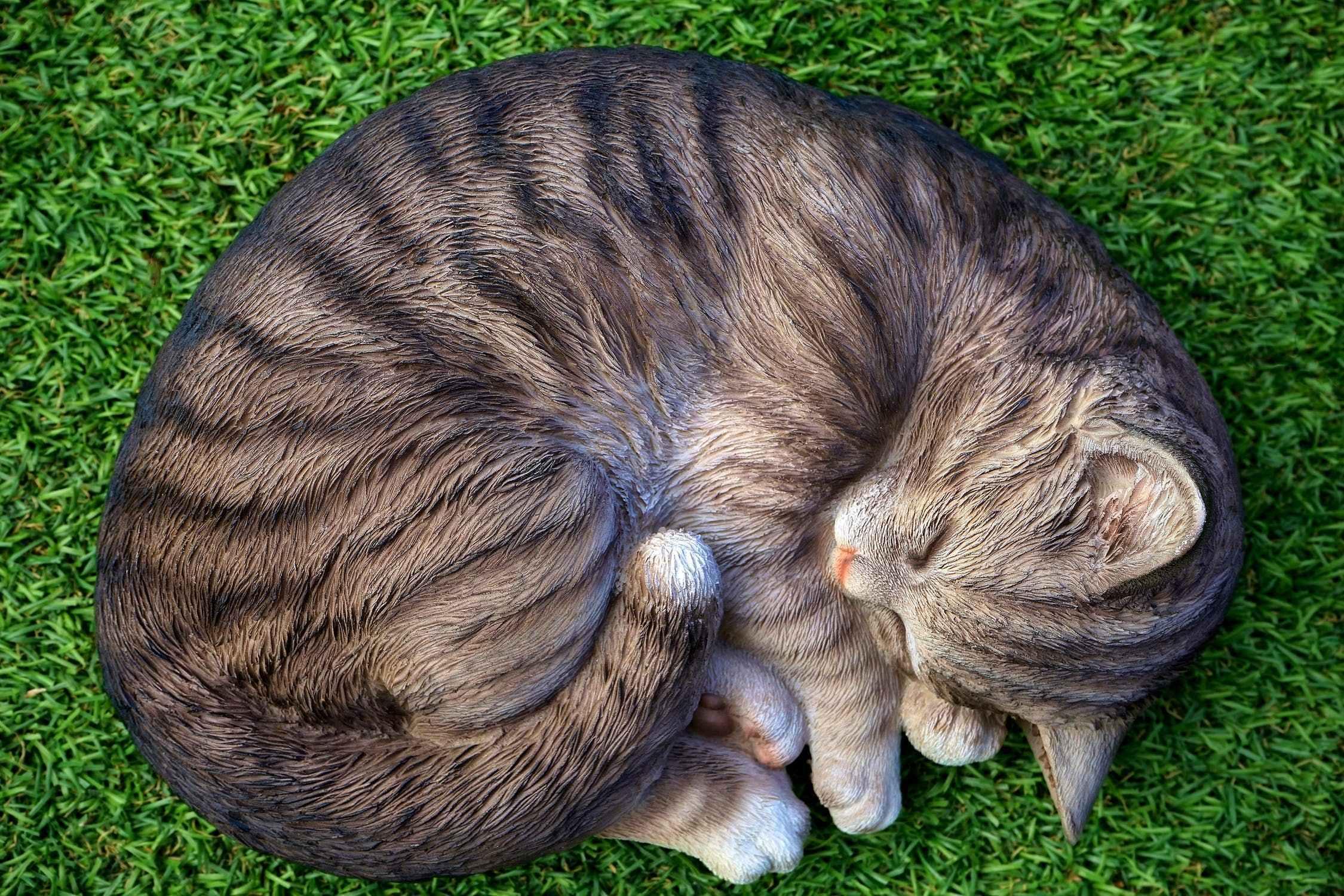 猫得了尿毒症怎么办图片