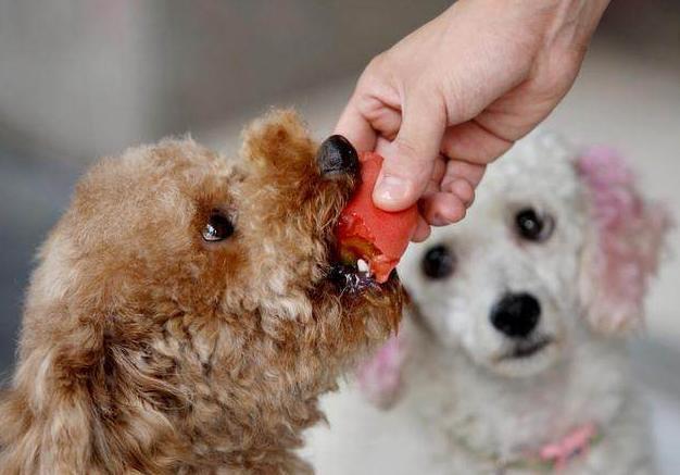 原创            想要泰迪健康,这5种蔬果绝不能喂,不仅有害还可能丧命!