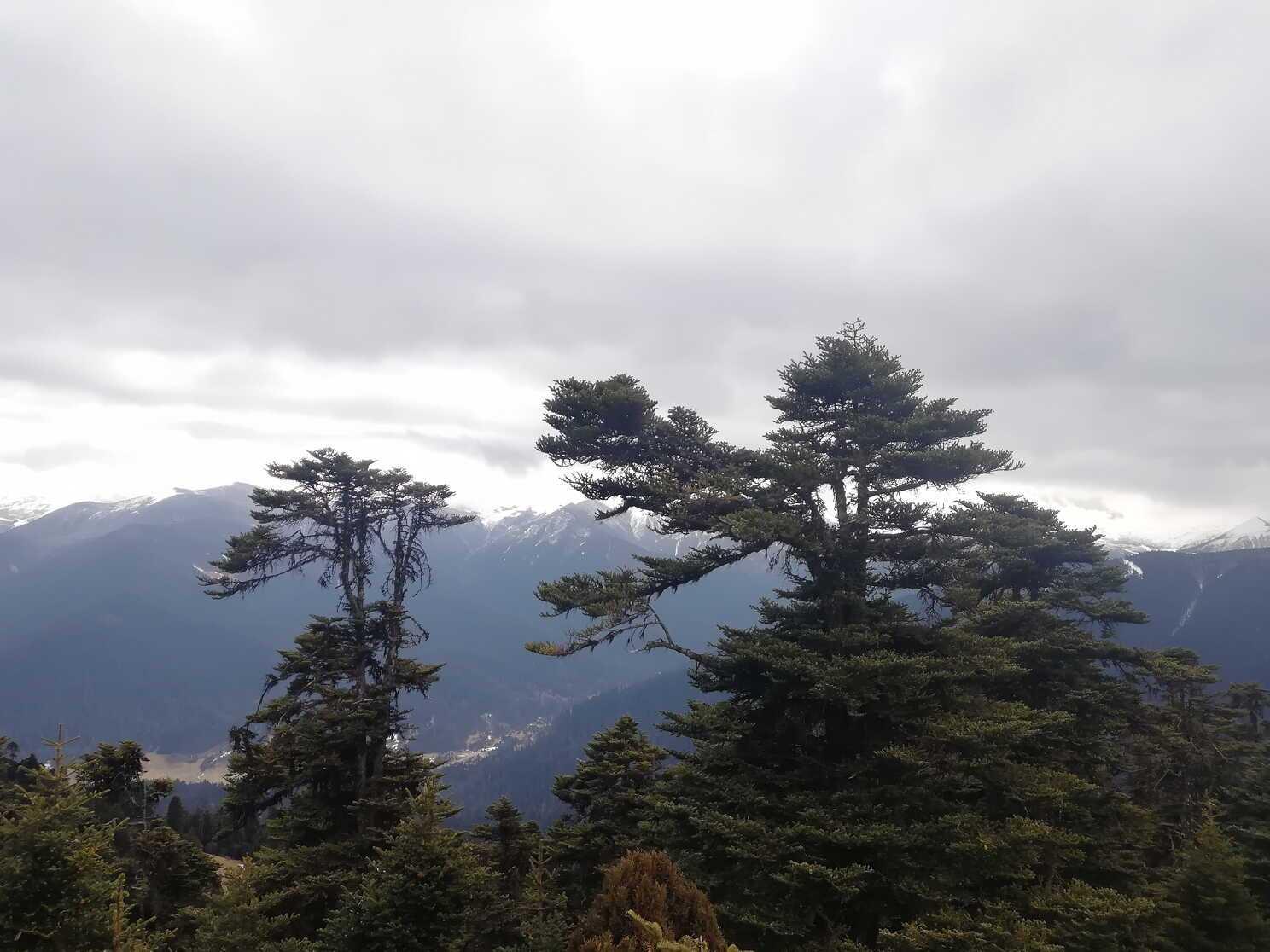 西藏有海?森林组成的海,被称为叫人不想家的地方