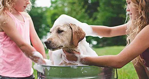 周岁之内的狗狗可以经常洗澡吗_宠物 正文  狗狗洗澡两三天可能就会有异味了,但尽管如此,也不要总是