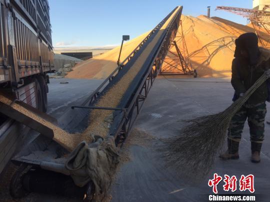 黑龙江水稻市场化收购达53% 首超政策性收购