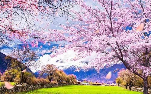 三月去林芝旅游合适3月西藏林芝旅游攻略湖边屋之攻略图片
