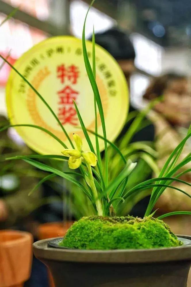 泸州春季兰花博览会,2000余盆兰花竞争风采!图片