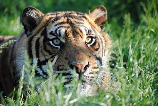 """古人为何把老虎称为""""山神爷""""?原来这个山神的作用可不简单"""