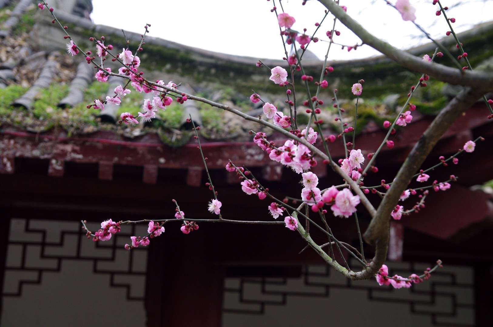 春风得意马蹄疾,一日识尽江城花