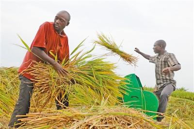 非洲国家积极寻求粮食安全出路(国际视点)