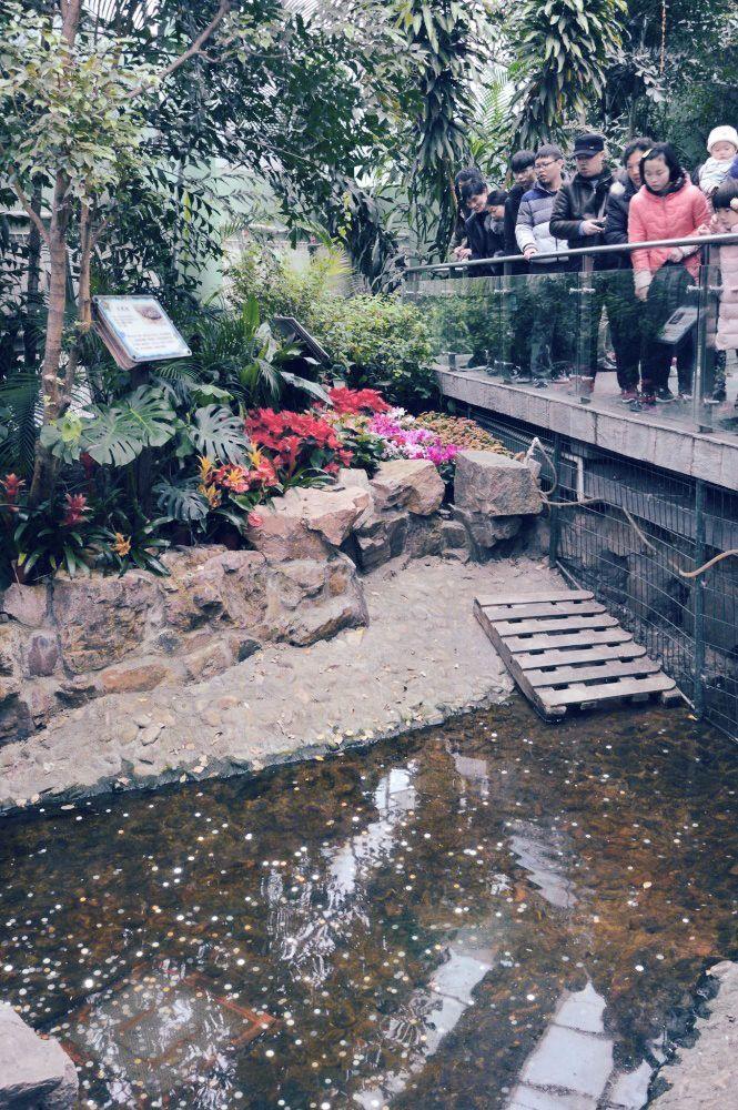 鳄鱼池变许愿池被丢满硬币,工作人员捡钱捡到手软
