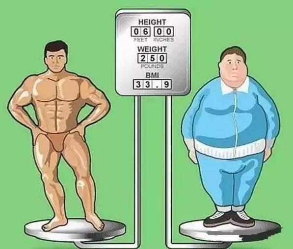 脂肪的体积大约是肌肉的3倍!