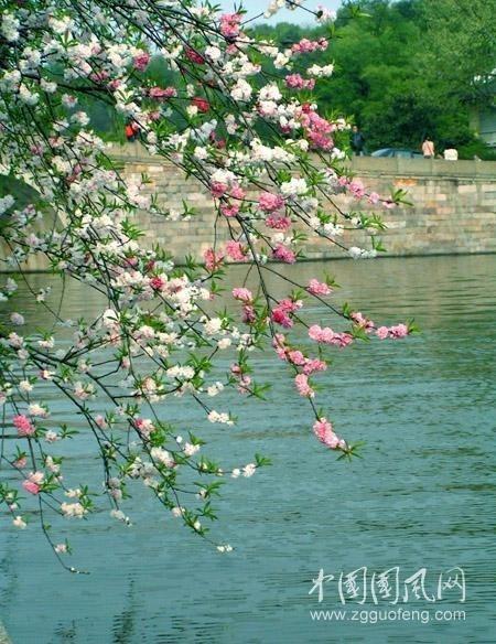 春 (作者:严寒)