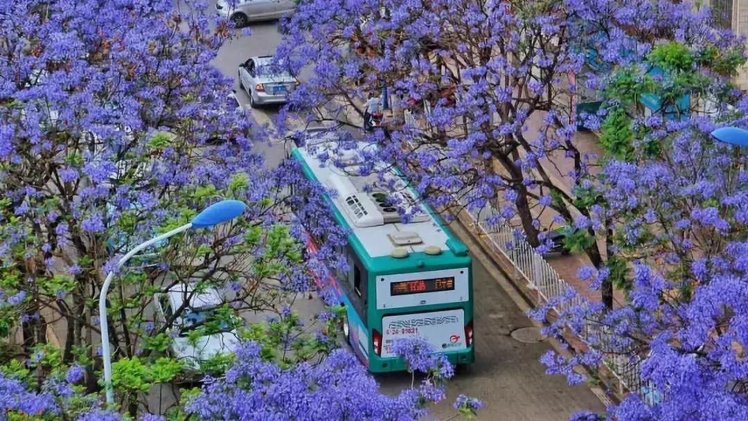 广西桂林恭城桃花节_这才是春天最适合的20个旅行地!_油菜花
