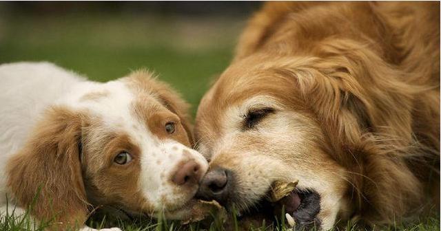 狗狗一闻到老虎的气味就吓跑了,为什么?
