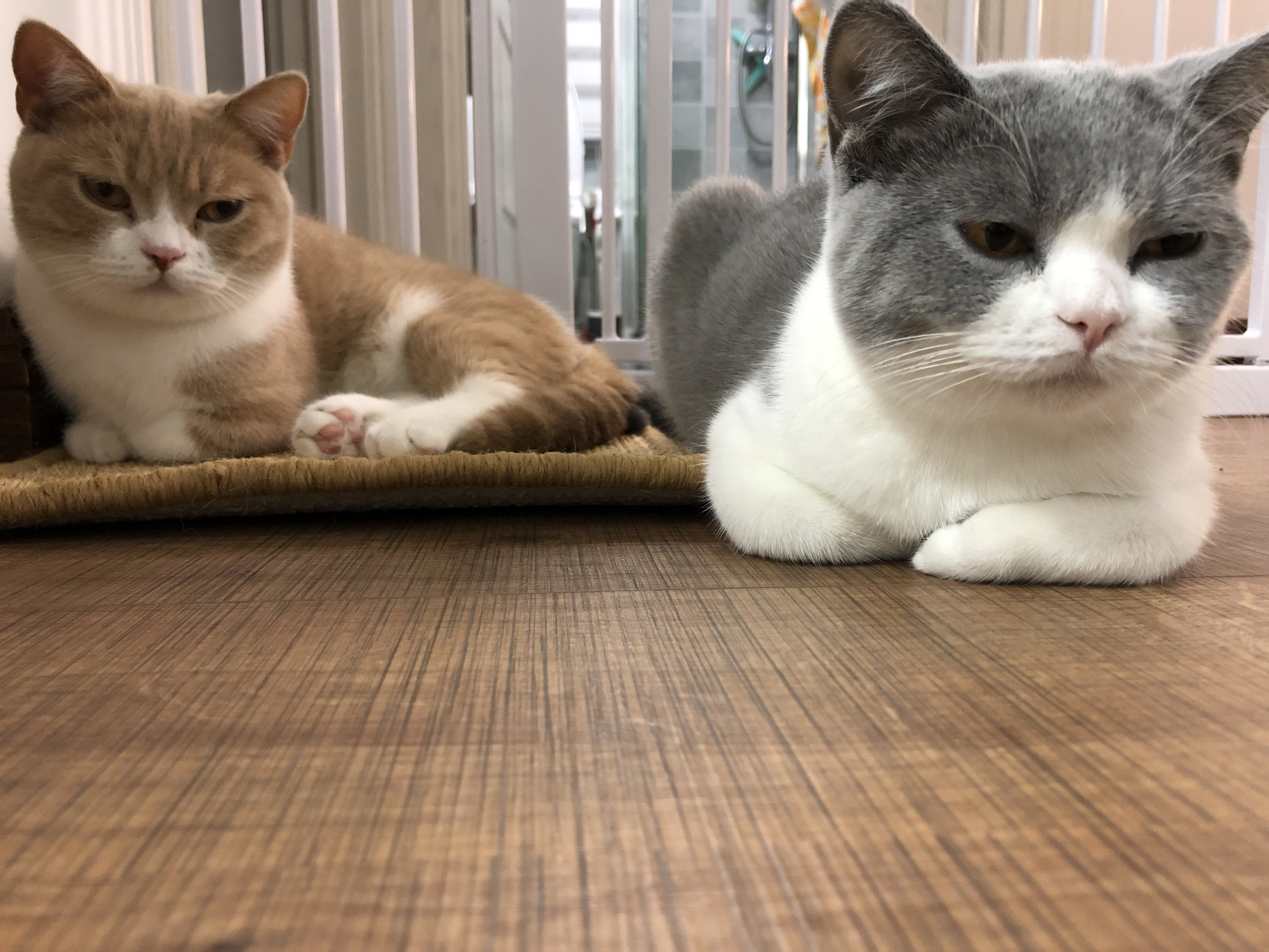 猫咪细小-波奇网百科大全