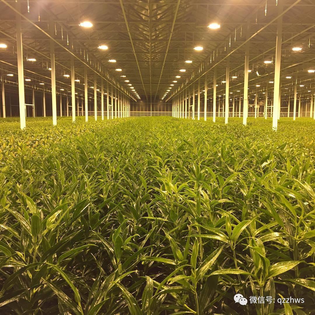 智慧温室为现代化农业保驾护航