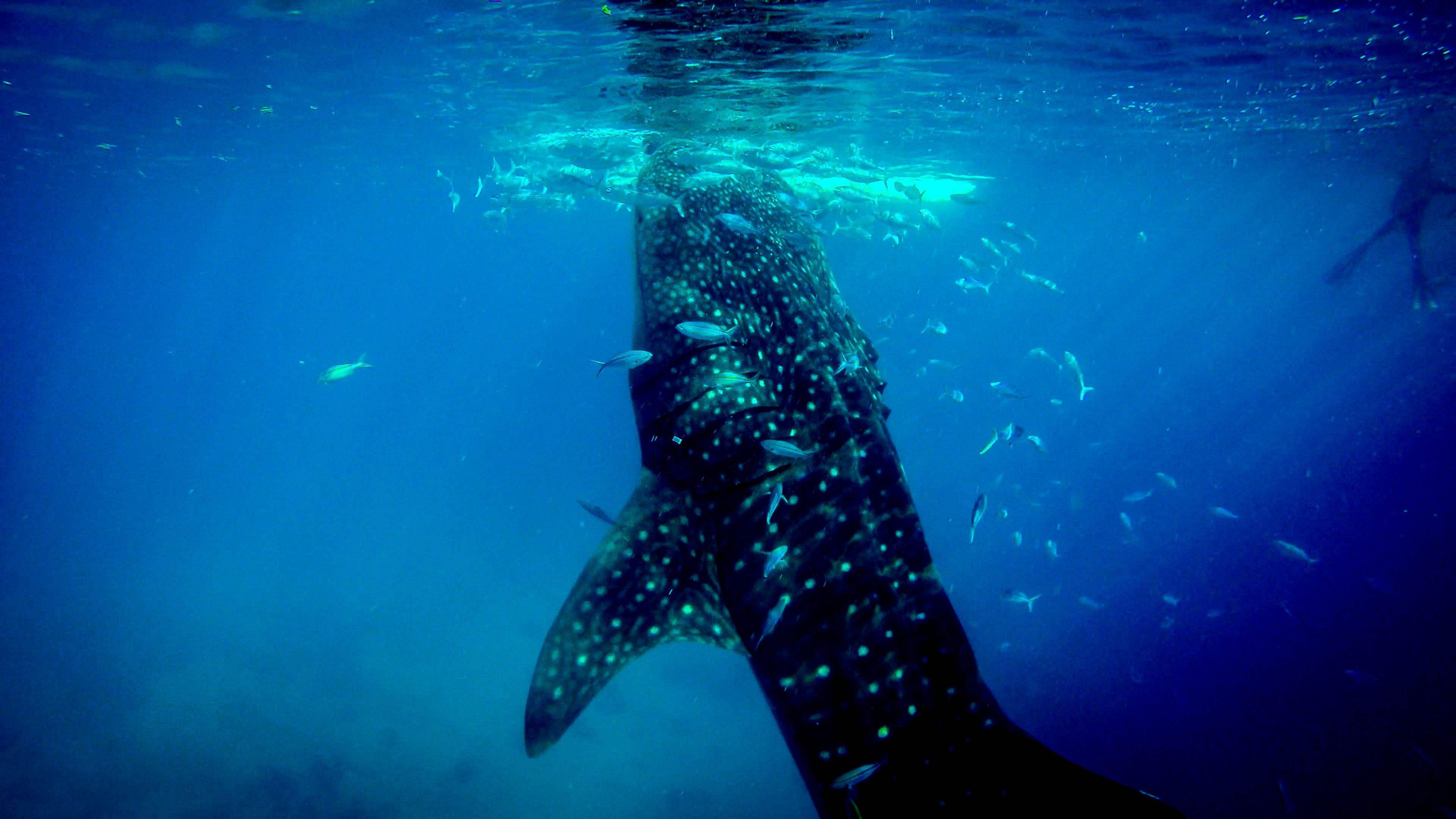 琉璃鲸人均_琉璃鲸图片