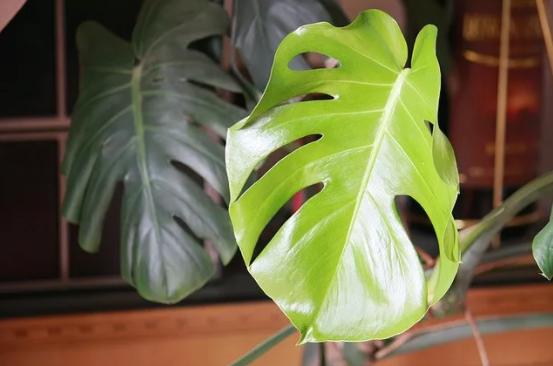 【滾動】除甲醛,植物到底有沒有用?專家的回答很中肯