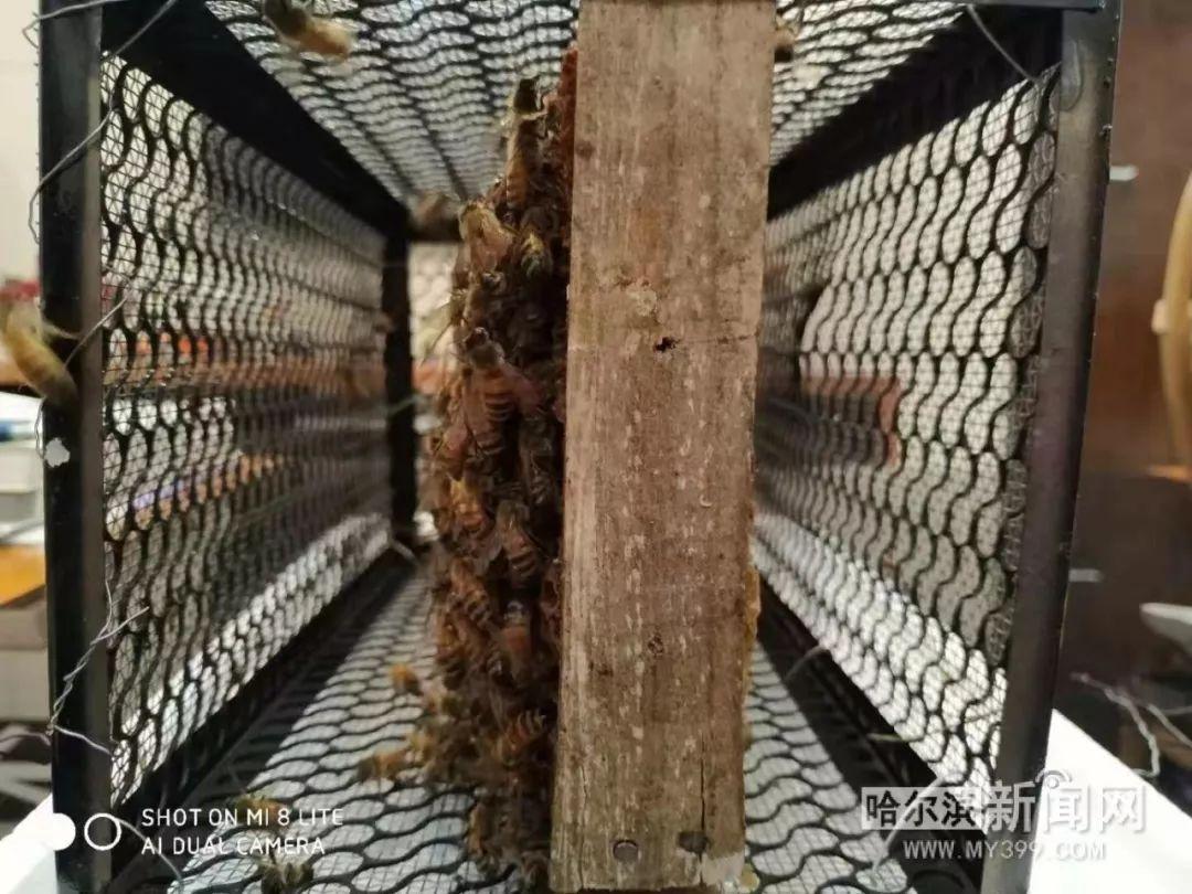 蜂疗的原理_蜂毒疗法原理及作用   蜂疗分为三大治疗体系:蜂毒疗法、蜂蜡疗法和蜂产品疗法.