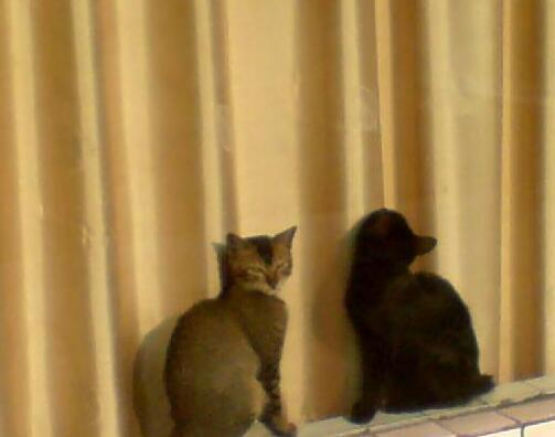猫咪半夜惨叫图片