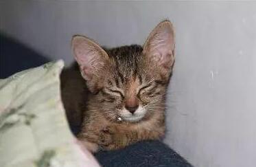 猫咪半夜挠门图片