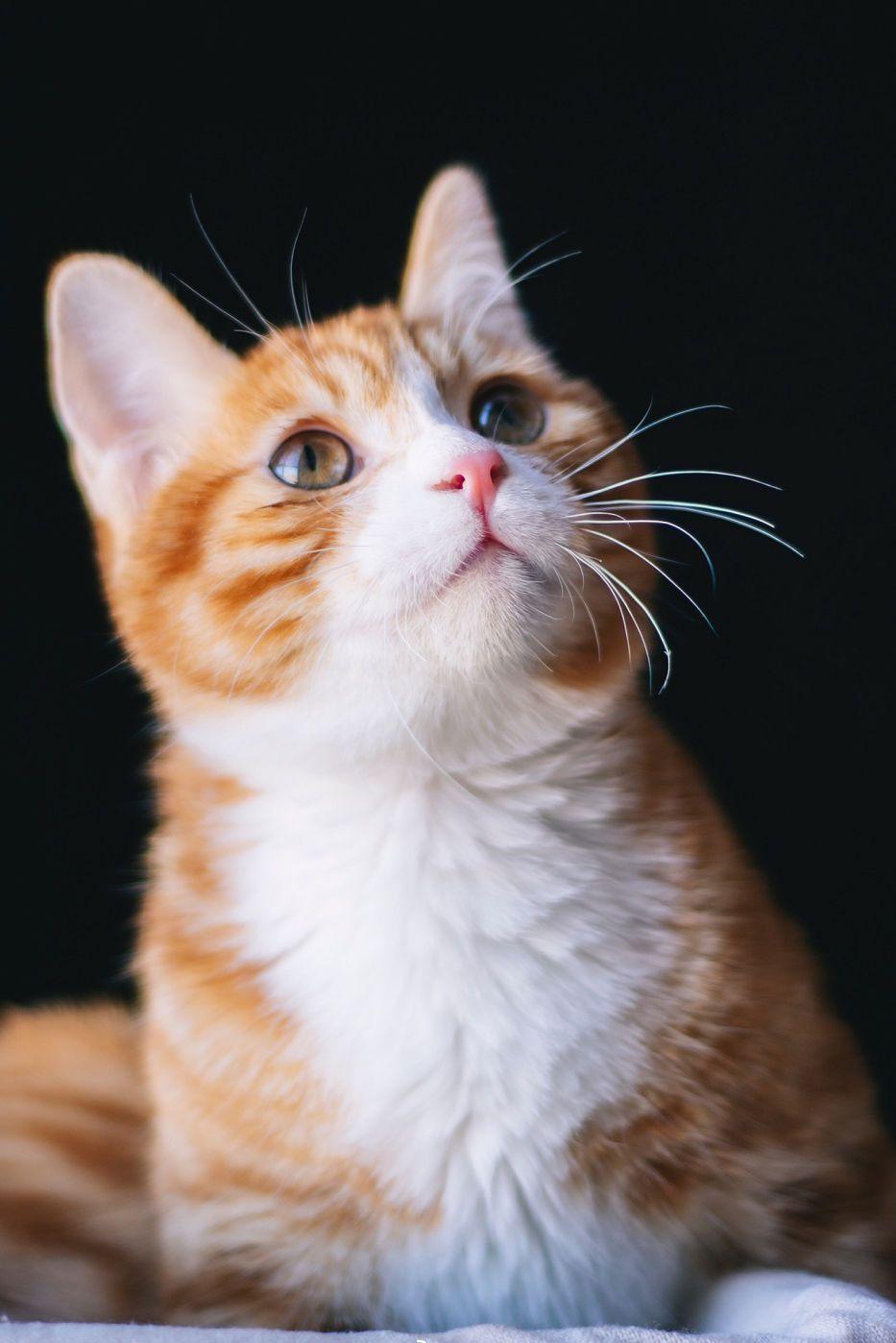 关于宠物摄影的小技巧