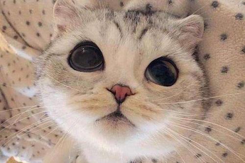 省钱耐用的猫砂,哪种猫砂更省钱
