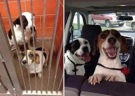 狗狗有家后的前后对比照,看了心塞吗?