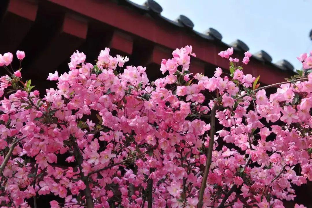 6种方式开启郑州春日悠游模式~,梅子黄时雨 晋江