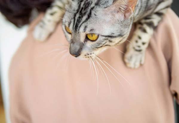 性 非 貧血 猫 再生 山陽動物医療センター 小動物臨床血液研究会【血液病、貧血、血液内科】