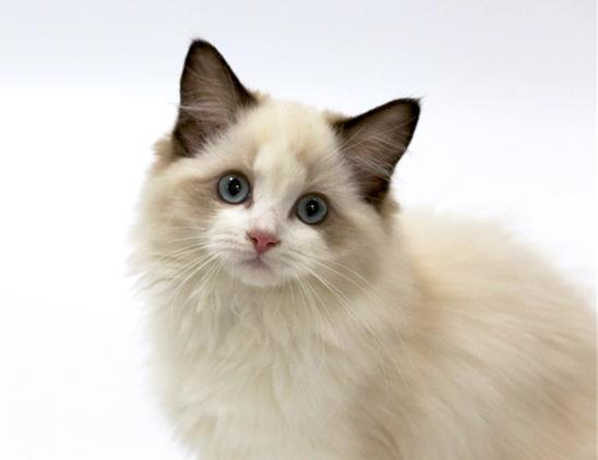 猫死后身体怎么处理图片