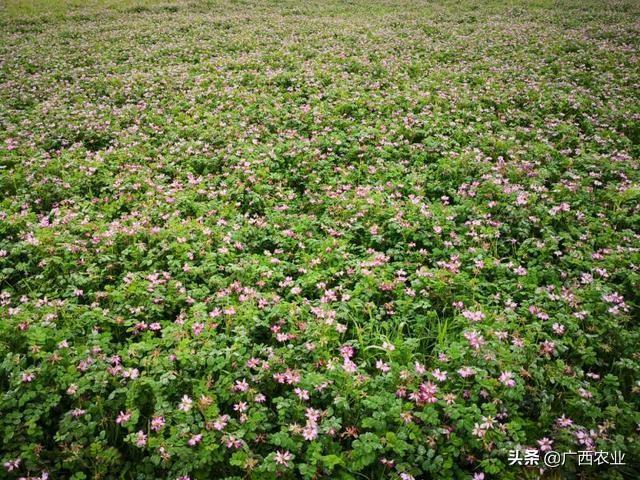 广西桂林乡村旅游:美了农村富了农民,2018年乡
