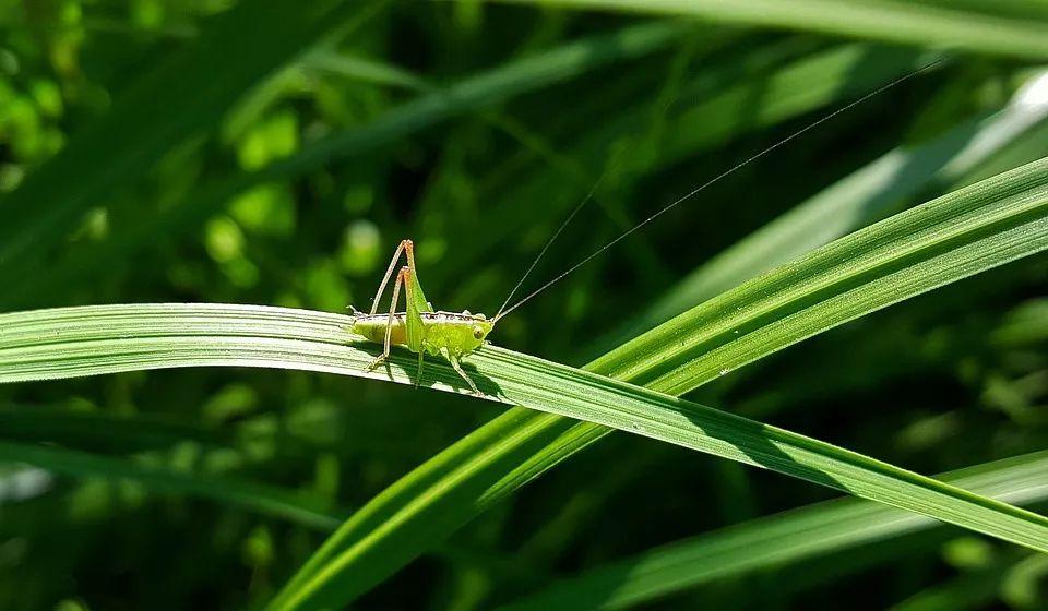 探尋昆蟲世界的奧秘:奶泡泡昆蟲日記(上)27集mp3有聲故事_圖片 4