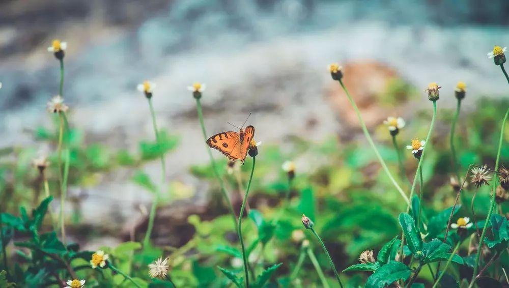 探尋昆蟲世界的奧秘:奶泡泡昆蟲日記(上)27集mp3有聲故事_圖片 8