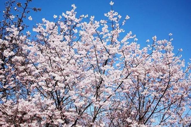 北京172处赏花好去处等您